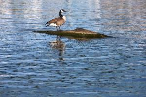 ohio-rijeka-ptica